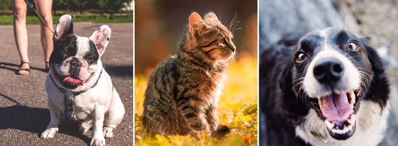 A dog, a cat and another dog are seen in this trio of images.